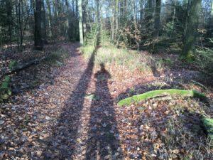 Das dichte Waldgebiet hält zahlreiche schöne Waldwege beim MTB-Trailcamp im Taunus für uns bereit.
